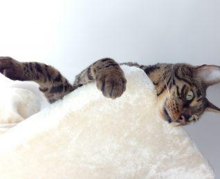 Dudas sobre gatos