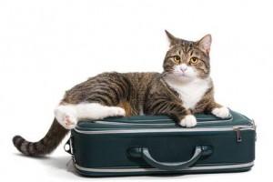 cuidado de gatos a domicilio Bilbao