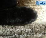 gatos sabios y maestros