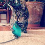 bienvenido amigo gato