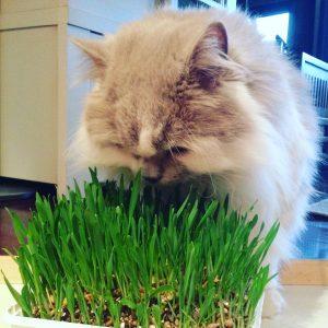 Plantas para gatos