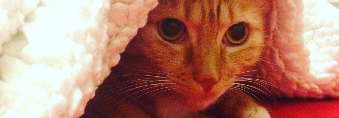 Cómo preparar la llegada de un gato a casa