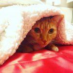 la llegada de un gato a casa