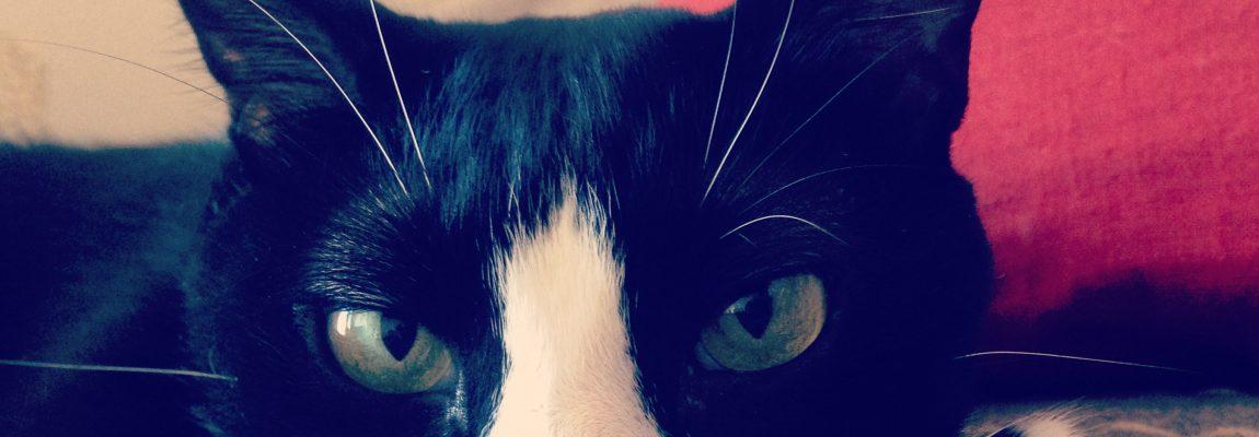 Los gatos, seres libres e independientes