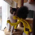 juego gatos caña araña