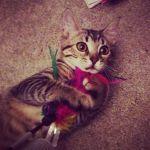 nuevo miembro de Cada gato en su casa