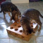 Caja para cazar premios o juguetes