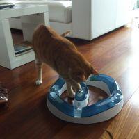 Circuito Cat it desing