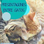 charlas de cada gato en su casa