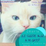 charlas de cada gato en su casa en Tienda Animal