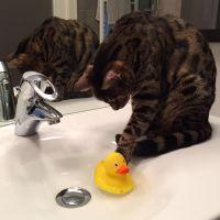 Los gatos y el agua